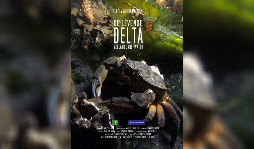 Zeker tachtig verschillende dieren- en plantensoorten passeerden zo de afgelopen twee jaar tijdens zo'n honderd duiken de lens van zijn camera.