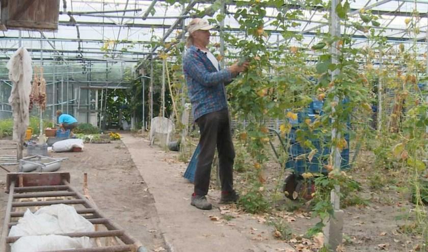 In het Westlands Museum wordt 16 juni voor de tweede keer de documentaire 'Laatste kouwe tuinder' getoond.