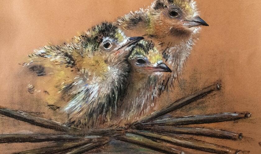Vogeltjes kijken de wijde wereld in. (Foto: Wim Weeda)