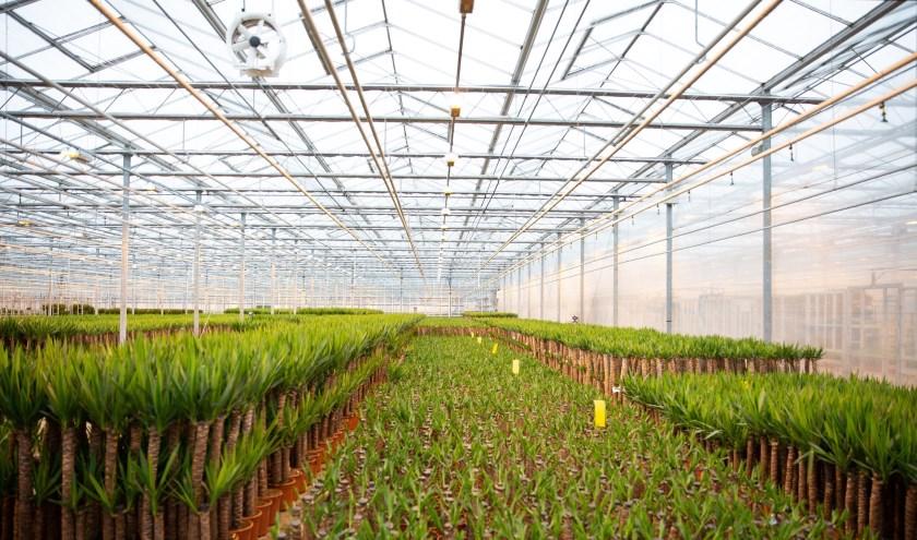 Trias Westland is een initiatief van HVC, Capturam, Royal FloraHolland en een grote groep glastuinbouwondernemers.
