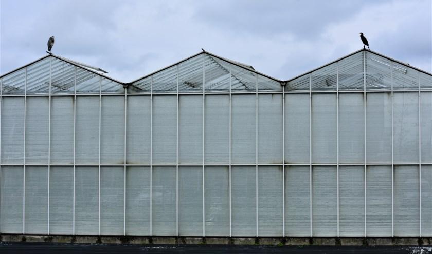 De glastuinbouw in het Westland kan niet zonder arbeidsmigranten. De huisvesting is echter een probleem.