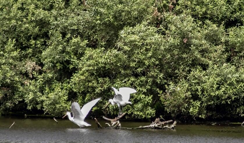 <p>Het Quackjeswater (Foto: Wil van Balen)</p>