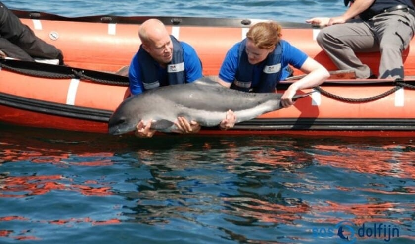 SOS Dolfijn kan van alles vertellen over deze dieren in de Noordzee.