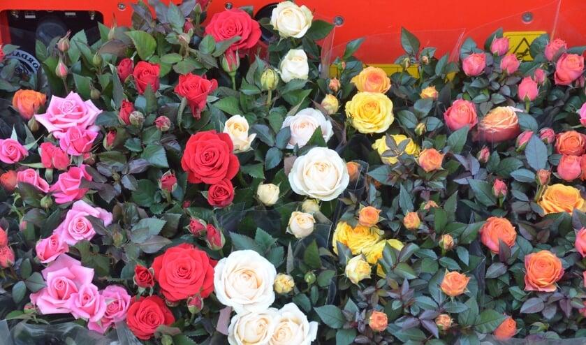 Geef uw tuin kleur met potrozen van de lokale kweker.