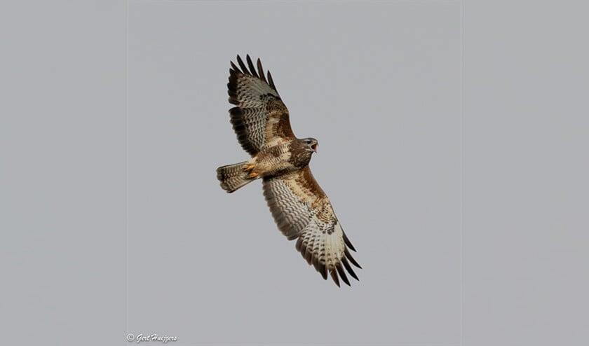 <p>Nu kunnen de vogels - waaronder de buizerd - hun gebied in alle rust gebruiken voor de zorg voor nageslacht </p>
