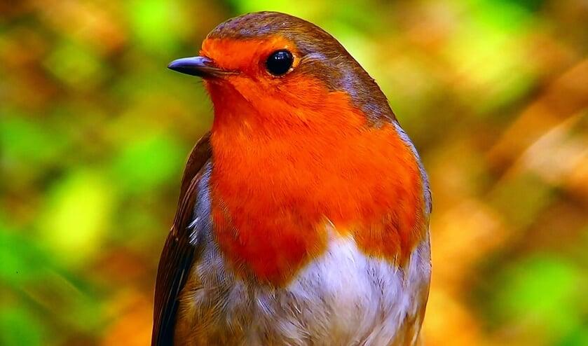 <p>Als de eitjes zijn gelegd wordt er wel regelmatig van de vogelpindakaas gesnoept. Iedere dag wordt ook een bad genomen. Zo blijft het verenpak in conditie en het vlies in de eieren voldoende vochtig. </p>