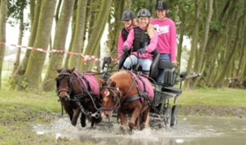 <p>Op de foto&rsquo;s is te zien hoe Cor Esselink zijn trekpaarden en Liza de Vogel haar twee shetlanders door de waterbak proberen te sturen.</p>