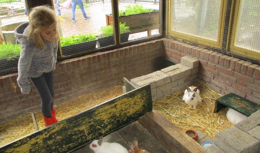 Amy Wagenmakers wilde de konijntjes even aaien.
