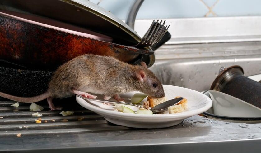 Bij een controle aan de Hoge Haansberg werden geen ratten gevonden. FOTO SHUTTERSTOCK