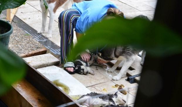 De twee overleden hondjes werden nog gereanimeerd.  Foto: Perry Roovers © BredaVandaag
