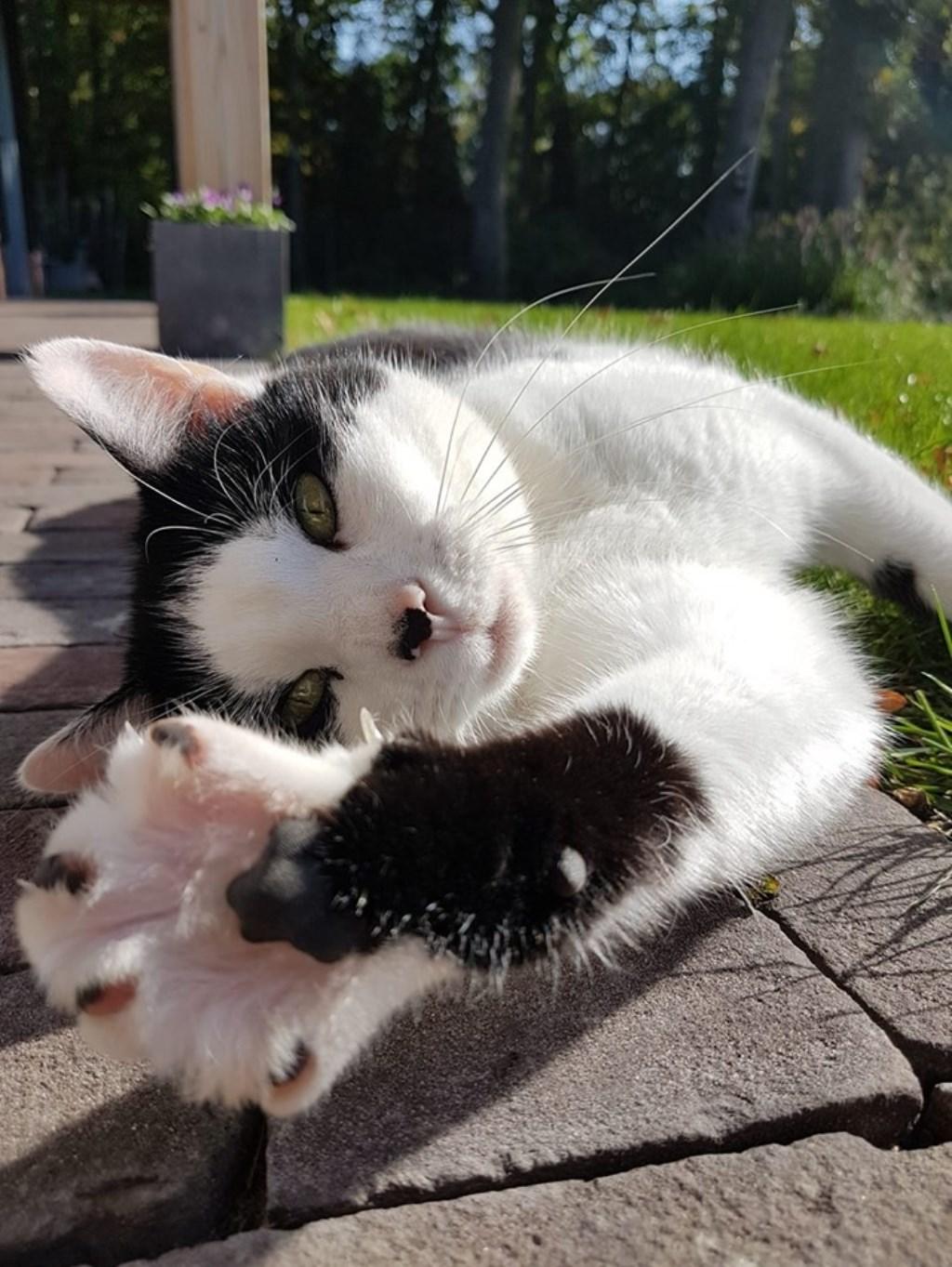 6-jarige Puk is ogenschijnlijk de liefste, maar echt een katje om niet zonder handschoenen aan te pakken. (Behalve door het vrouwtje)  © Internetbode
