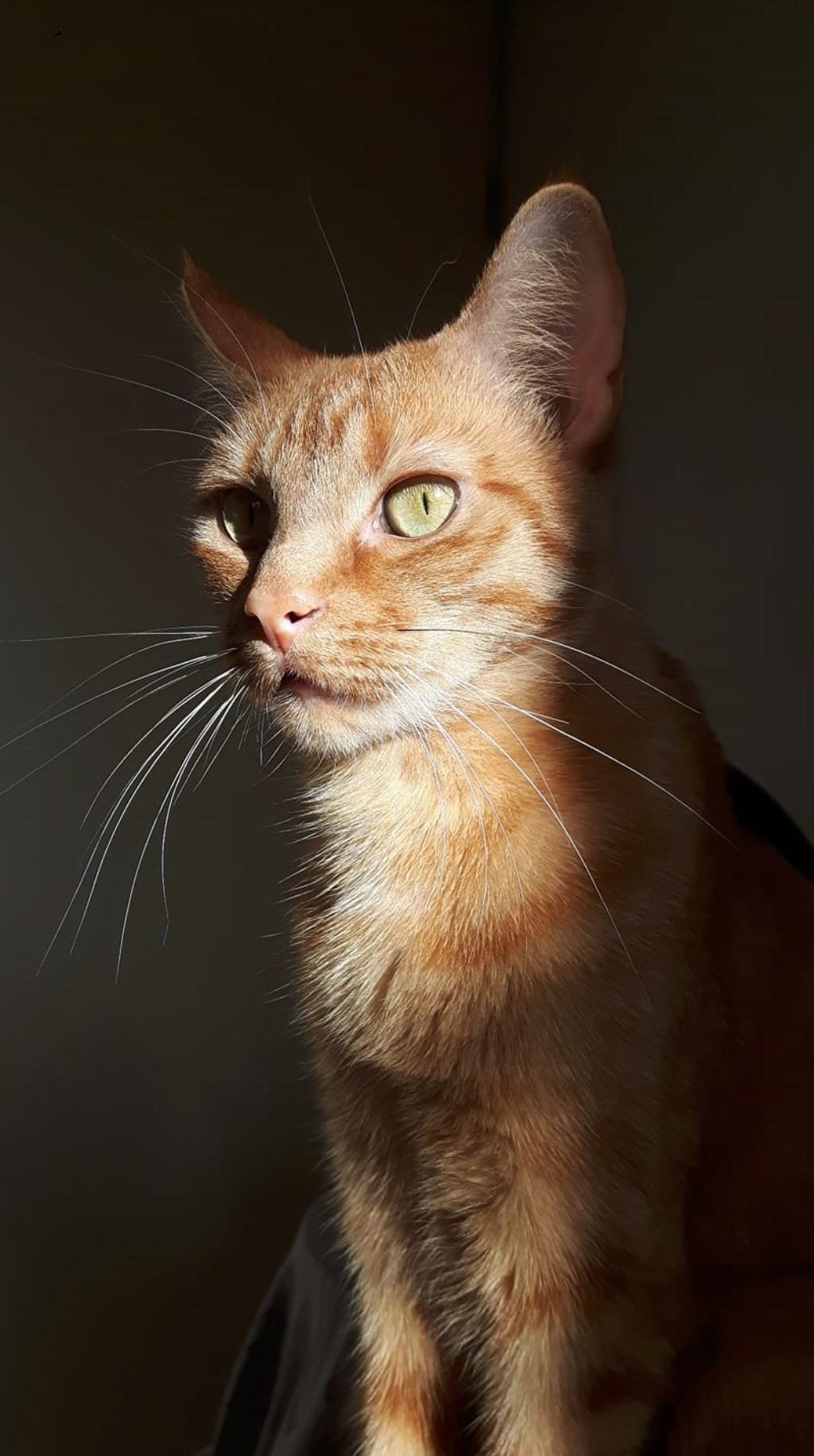 Dit is de zeer ondeugende Leila van 4 jaar Foto: Hedwig van Wezel © Internetbode