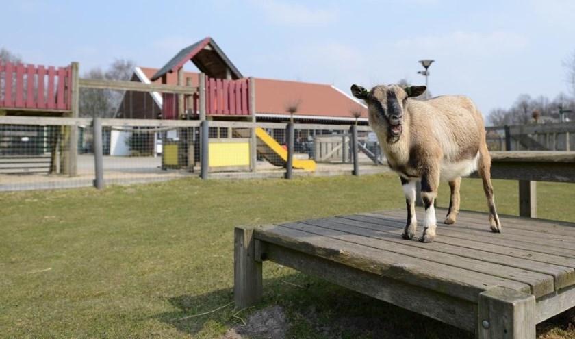 Kinderboerderij Parkhoeve