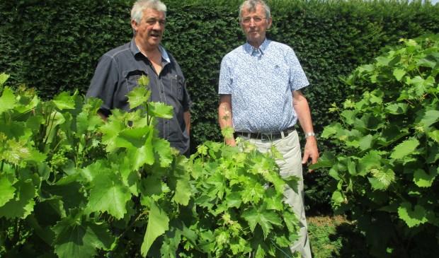Ad van der Made (rechts) weet alles over wijn maken. Foto: Ties Steehouwer © Internetbode