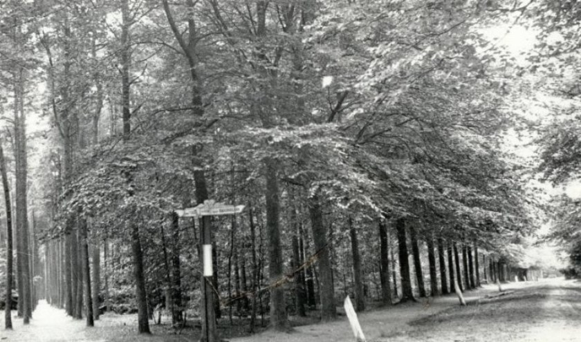 Het Eeuwig Laantje. FOTO STADSARCHIEF