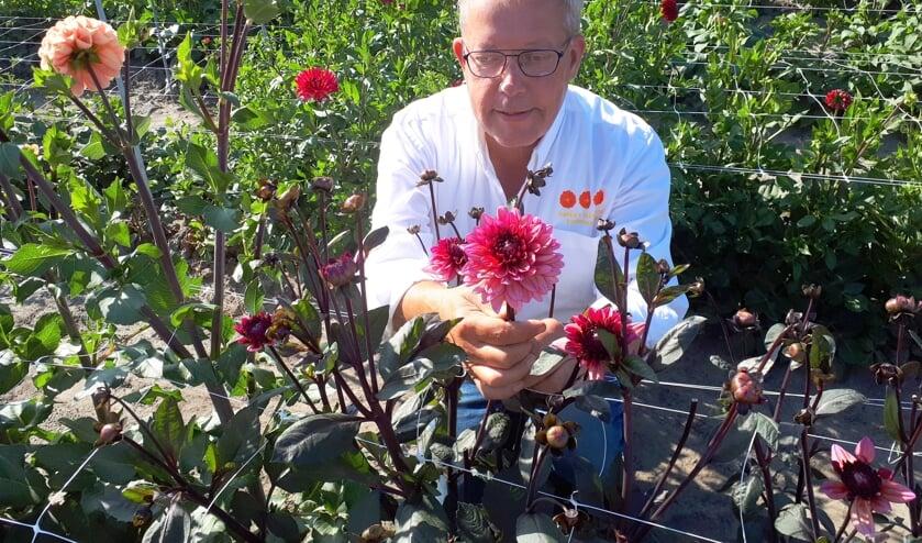 Frans Sturm in één van zijn drie bloemenzeeën in Heinkenszand.