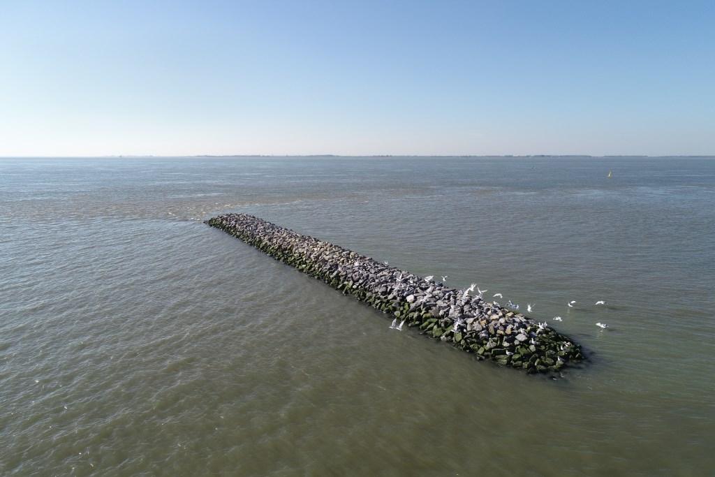Een hoogwatervluchtplaats blijft ook bij vloed droog, zodat vogels erop kunnen uitrusten.  © Internetbode