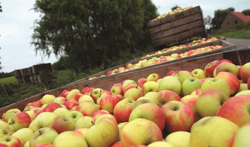 fruitpluk-kapelle-large