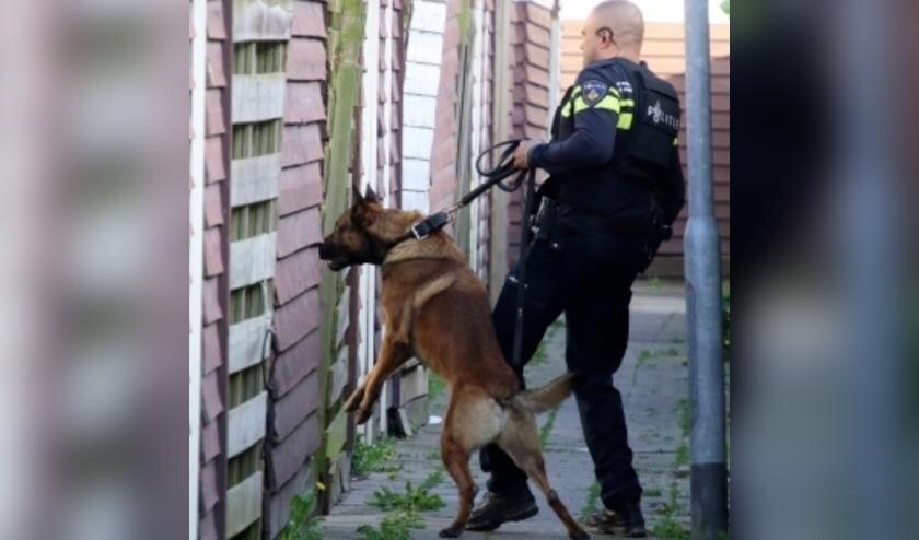<p>Agent en hondengeleider Cor Houmes in actie met Barry.</p>