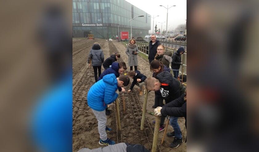 Onder toeziend oog van de burgemeester stopten de leerlingen 5000 tulpenbollen in de grond.