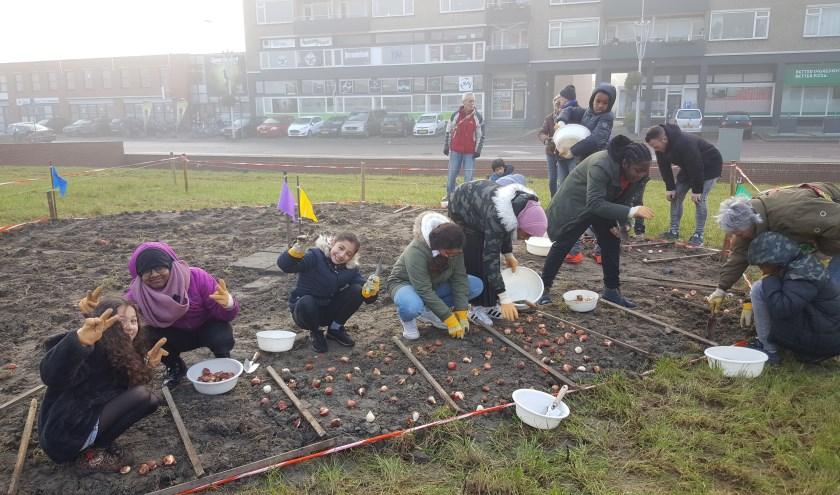 Leerlingen van de Parkschool helpen bij het poten van tulpenbollen op het Poptahofveld