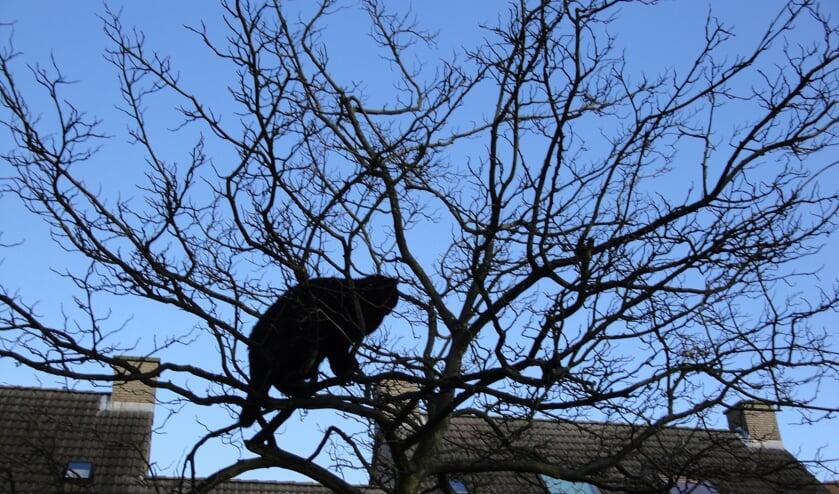De (inmiddels overleden) zwarte kat van Corine struinde ook geregeld door de bomen van Midden-Delfland
