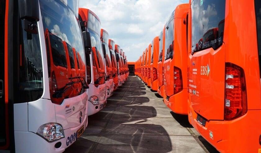 De bussen van EBS, de nieuwe steekvervoerder voor Haaglanden, in rangorde opgesteld (Foto: Harry Laming)