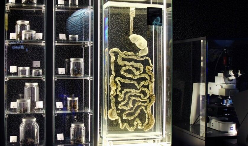 Een volledig maagdarmkanaal is ook te zien op de tentoonstelling 150 jaar Gist