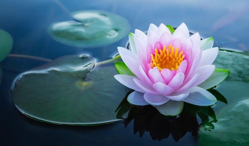 WZH De Lotus kan je hulp goed gebruiken!