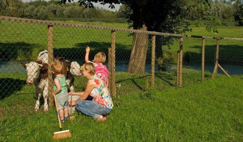 <p>Alle ingredi&euml;nten voor goede kinderopvang op Hoeve Ackerdijk: toezicht, veiligheid en ruimte (Tekst: Rianne Dekker)</p>