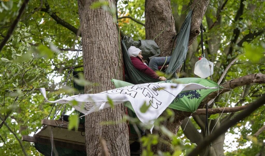 Tvangsfjernelse af klimaaktivisterne, der besætter træerne i banegårdskoven er i første omgang afyst, siger politiets fagforening Gewerkschaft der Polizei.  (Arkivfoto: Tim Riediger)