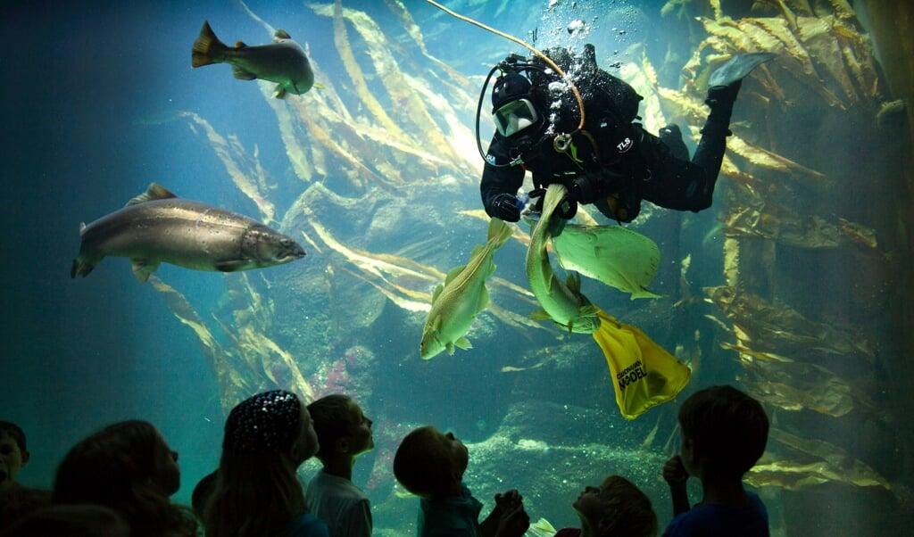 Dykkere i det store akvarium i Multimar Wattforum i Tønning.  (Fotograf: Birresborn-LKN.SH)