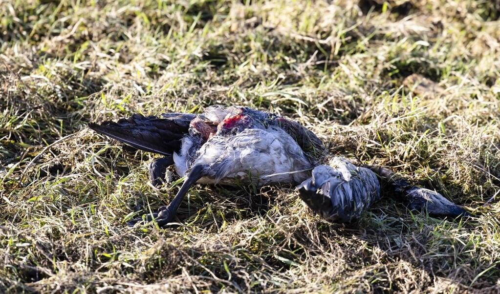 I de seneste dage er der fundet mange døde vildfugle i Slesvig-Flensborg Amt.  (Genrefoto: Frank Molter/dpa)