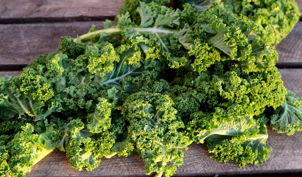 Grønkål i rå form er god for maven, den indeholder A-vitaminer og styrker knoglerne.  ( Camilla Pi Kirkegaard)