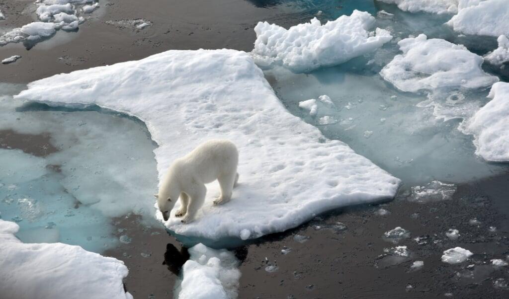 <p>Den nyere tids klimaforskning har sat forskerne i stand til meget mere pr&aelig;cist at pege p&aring; de klimam&aelig;ssige udsving, som for eksempel giver isbj&oslash;rnene sv&aelig;re levevilk&aring;r. &nbsp;</p>  ( Ulf Mauder, dpa)