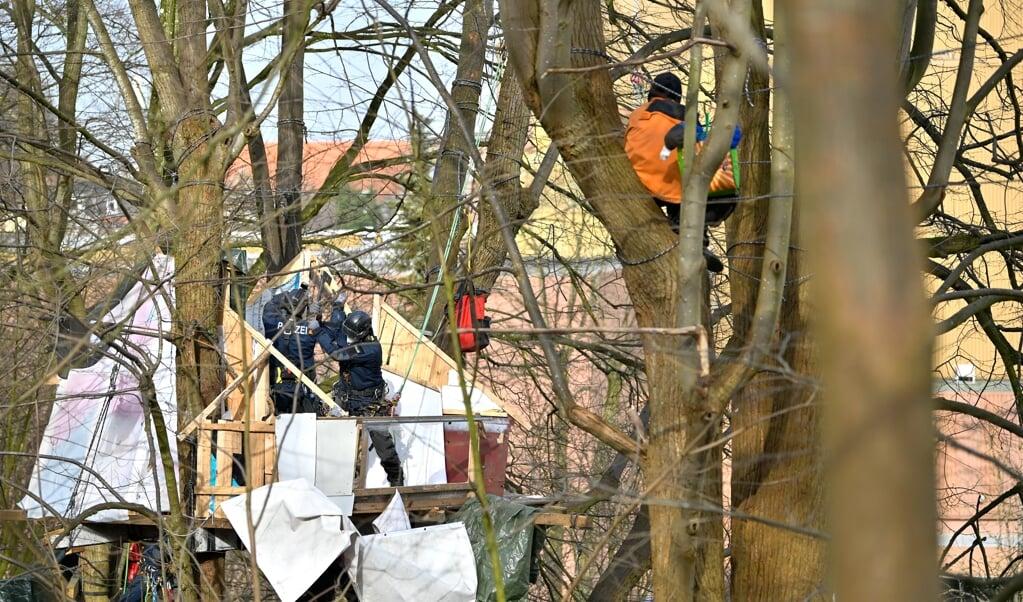Seit drei Tagen harrt der Aktivist Mike in den Bäumen aus und musste dabei zusehen, wie ein Baumhaus nach dem anderen zerstört wurde.   (MARTIN ZIEMER)