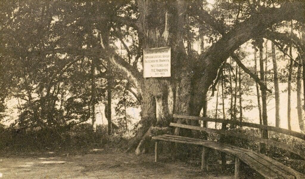 Der har været opsat tre mindeplader på det gamle lindetræ i Augustenborg Slotspark. Det første kom op i tysk tid. Det næste skilt (ses på det store foto), blev sat op efter 1920. Det tredje (indsat) er fra nyere tid og er nu taget ned.  (Arkivfotos)