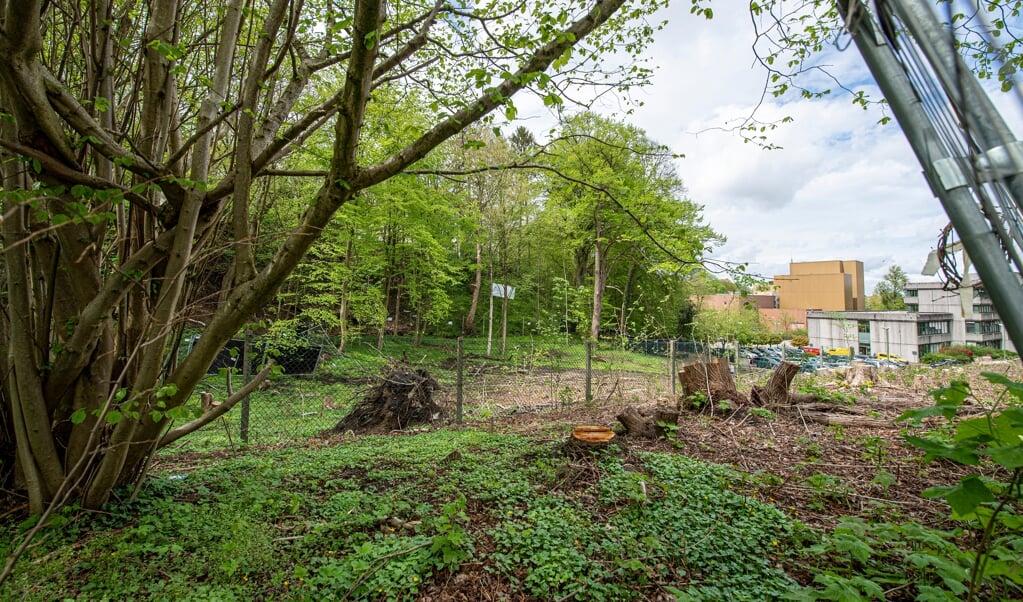 Der BUND geht jetzt im Gericht gegen die Waldumwandlung des Bahnhofswaldes vor.  ( Tim Riediger)
