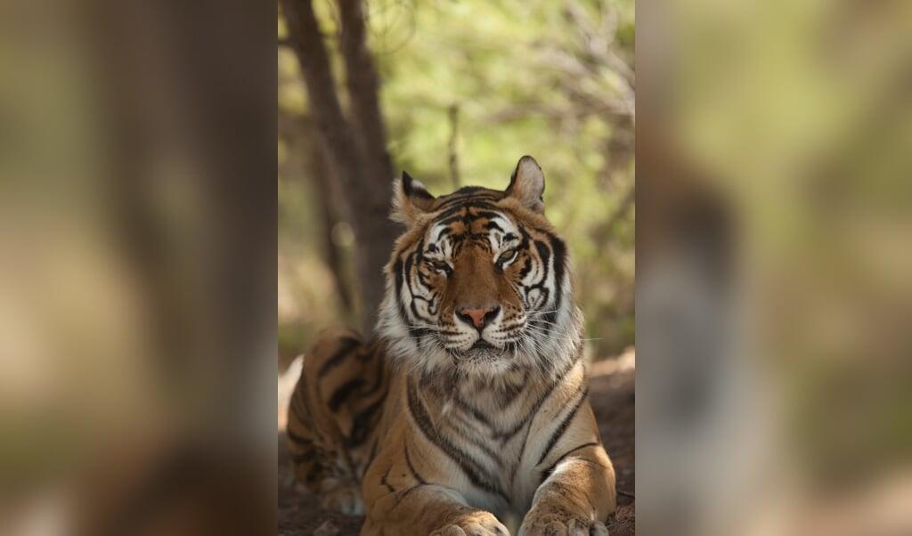 Dyrenes Beskyttelse und Knuthenborg Safaripark geben Zirkustieren ein neues Zuhause.   ( AAP)