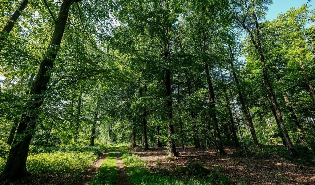 Det ser idyllisk ud, derude i skoven. Men skoven kæmper.  ( Sebastian Iwersen)