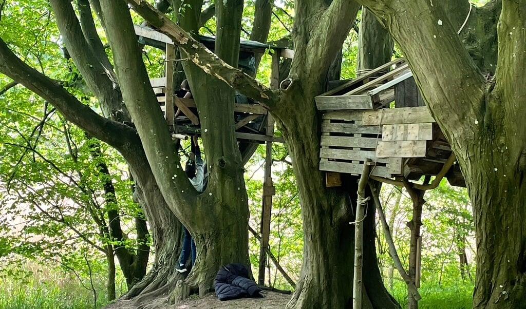 Hov, en fugl har bygget rede her, råber en dreng, oppe fra en af de to palle platforme, som er bygget i nogle af de høje træer på grunden. En drøftelse går igang. For hvem har nu ret til at bruge platformen?   ( Kirsten Elley)