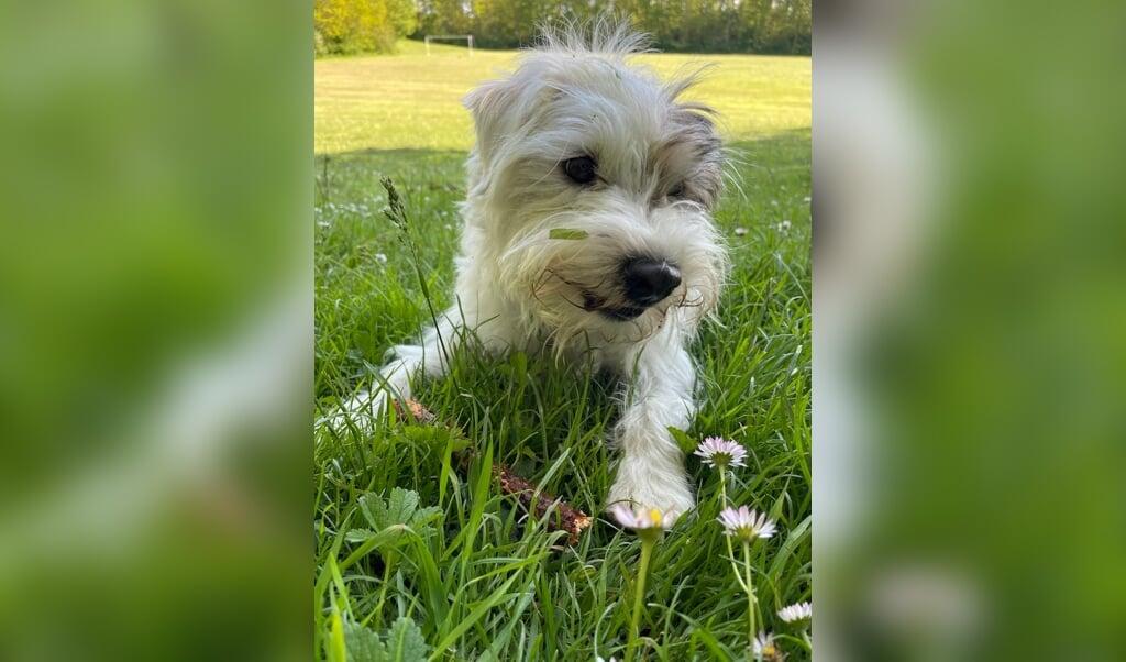 FØR: Sveske er uglet. håret stritter, græs og tæger sætter sig fast og hun er lidt hippie-agtig at kigge på.  ( Kirsten Elley)