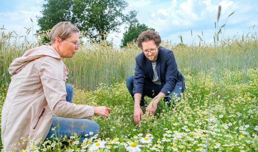 Expertin Kathrin Romahn (AG Geobotanik) zeigt Umweltminister Jan-Phillip Albrecht einige der seltenen Ackerwildpflanzen, wie hier z.B. die gefährdete Hundskamille, die auf einer Schutzfläche in Kosel (Schwansen) zu finden sind.    (Sven Geißler)