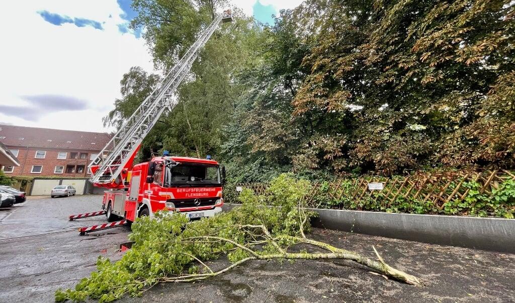Med hjælp fra stigevognen fik brandfolkene lempet trækronen ned på jorden.    (Heiko Thomsen.)