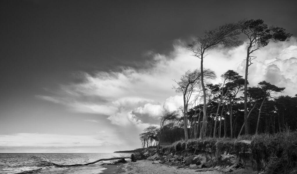 Rehberge vor Darß. Der Darß ist der mittlere Teil der Halbinsel Fischland-Darß-Zingst an der südlichen Ostseeküste in Mecklenburg-Vorpommern.   (Peter Haefcke)