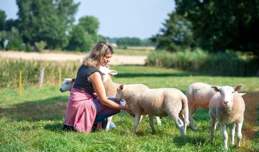 Ægteparret Hartwig og Michaela Callsen avler lam med henblik på kødproduktion. Netop derfor har de valgt den engelske fårerace Easycare, som er særligt velegnet hertil.     (Tim Riediger)