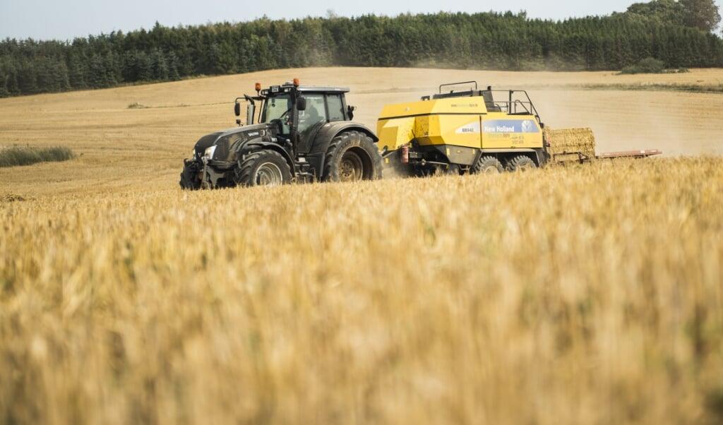 Store arealer i Danmark bliver benyttet til at dyrke korn, der kan presses sammen til baller. (Arkivfoto)  (Anne Bæk/Ritzau Scanpix)
