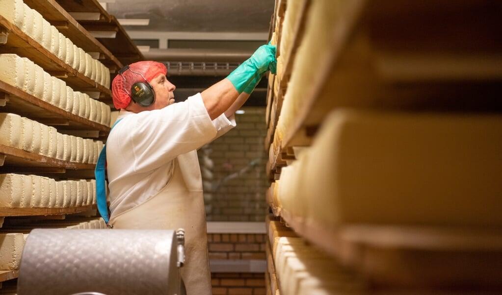 - I alt har Holtsee Landkäserei 70.000 oste i tre lagerrum nede i kælderen, som alle skal vendes en gang om ugen, mens de modnes frem mod at blive solgt som lageroste.    (Kira Kutscher)