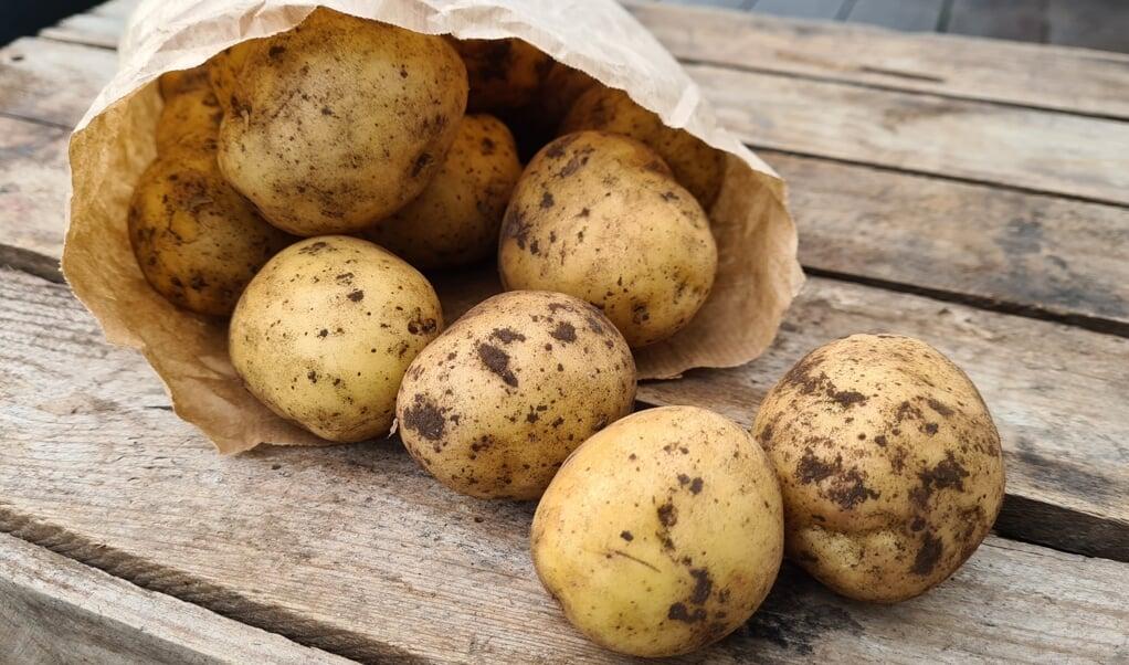 Kartofler er sunde, selv om de seneste års kulhydrat-forskrækkelse har været hård kost for dem.  ( Camilla Pi Kirkegaard)