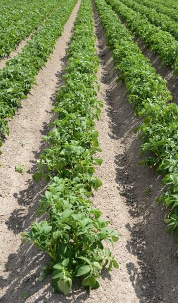 Er staan veranderingen in stapel in de landbouw.